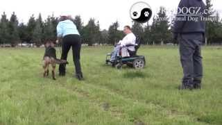 Dog Obedience Class Medford Oregon: Sarah & Monty Learning The Go-out