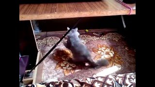 Мурзик смешной кот, сибирская порода кошек