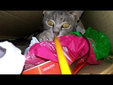 Meet my cat: Gruu | Krizia B.