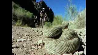 Tierisch Extrem Top 10 - Todesschlangen