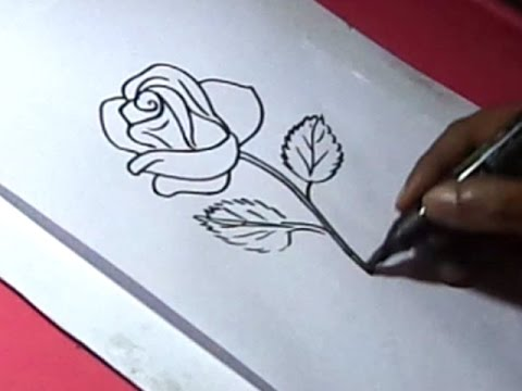 How To Draw Rose Flower Drawing For Kids Youtube