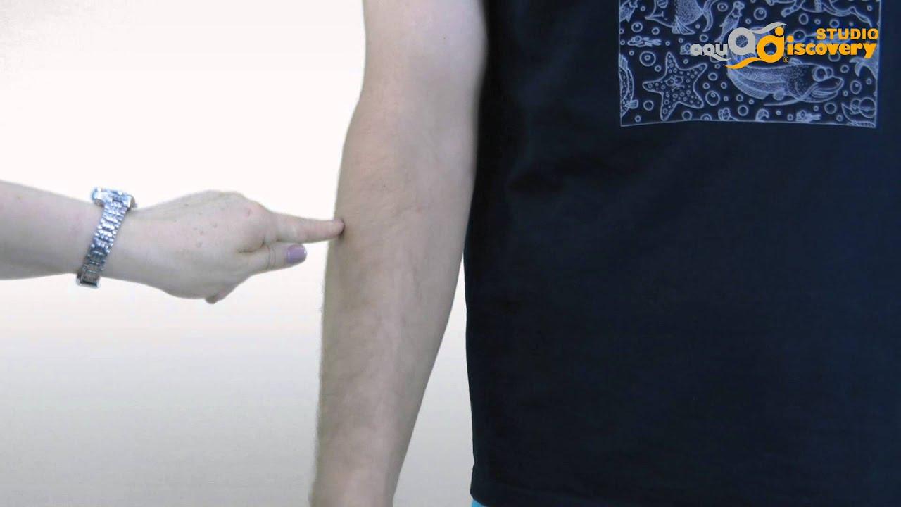 Как измерить предплечье фото