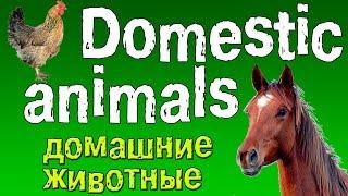 Английский для детей. Животные на английском языке.(домашние животные).
