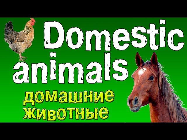 Гдз по русскому языку сочинени на тему мой любимый хомяк
