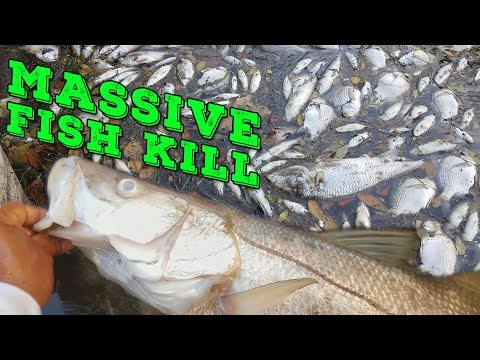 MASSIVE FISH KILL! BIG Fish Dying Everywhere | Monster Mike