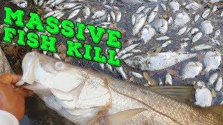 MASSIVE FISH KILL in Florida! BIG Fish Dying Everywhere!!!