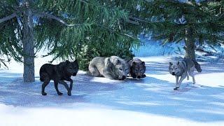 Как волк зимой живет? Детям про животных.