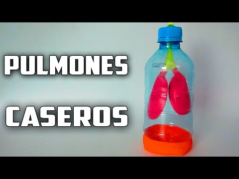 How To Make A Model Of Lung Caseros breathing-School Project