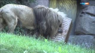Zu zweit ist man weniger allein | Elefant, Tiger & Co. (625) | MDR
