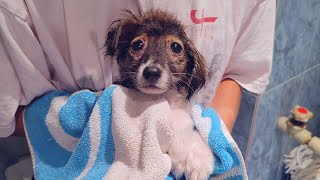 Bath, Vet And A Warm Bed For Abandoned Little Puppy