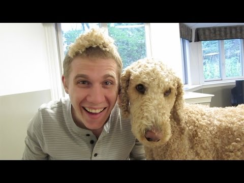 ADORABLE STANDARD POODLE HAIR CUT!!! (5.12.15)
