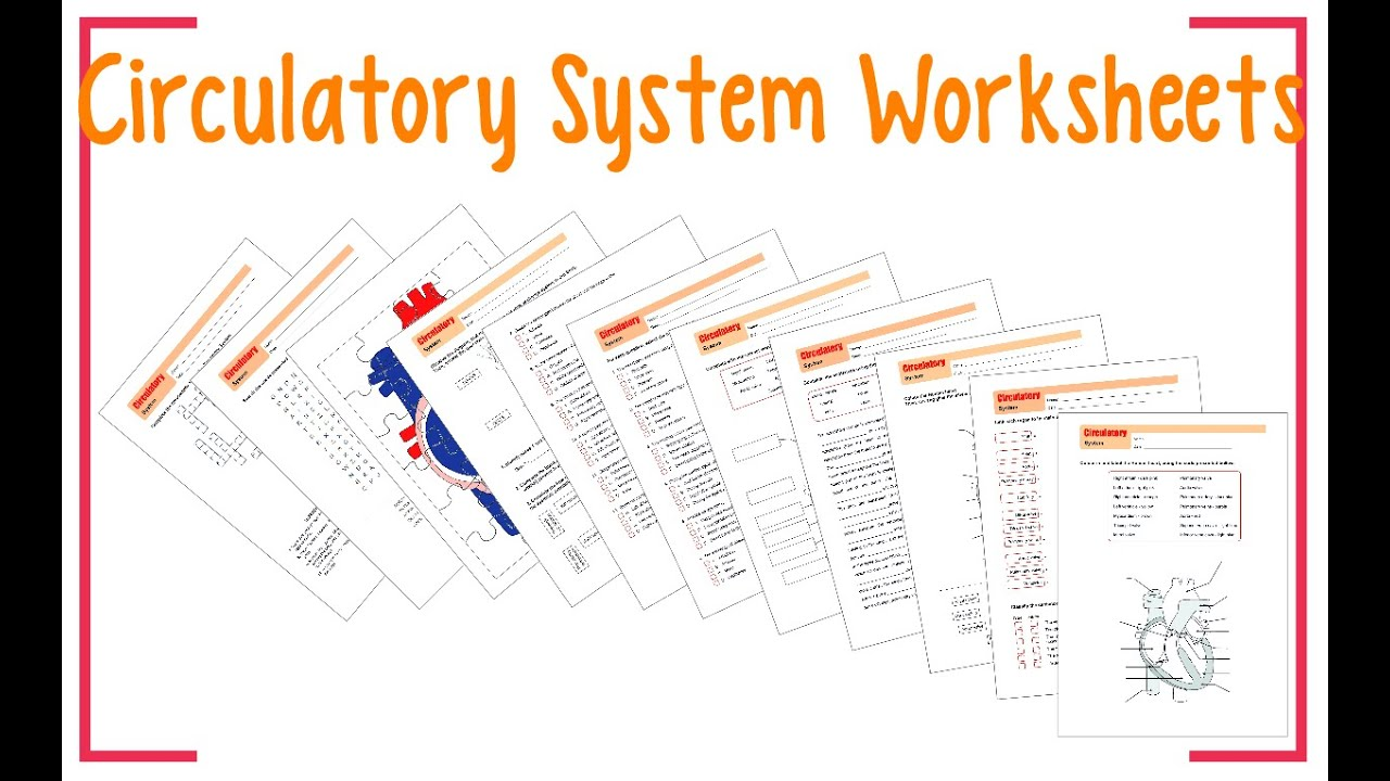 worksheet Circulatory System Worksheets Kids worksheets circulatory system youtube