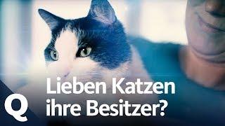Katzen-Experiment: Lieben sie ihre Besitzer? | Quarks