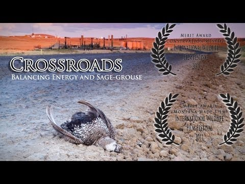 Crossroads - featuring David Allen Sibley