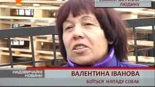 В Одессе бродячие собаки съели бездомного.(, 2011-12-27T18:04:04.000Z)