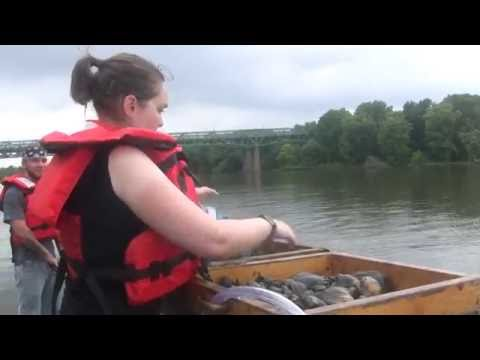 IDOT Mississippi River Mussel Relocation