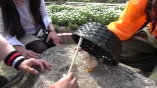2012年4月23日配信 宮崎のローカルヒーロー『天尊降臨ヒムカイザー』製...