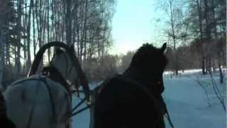 1001 Adventure Trips | Travel Blog - Travel Minute | Winterreisen nach Russland - Pferdeschlitten