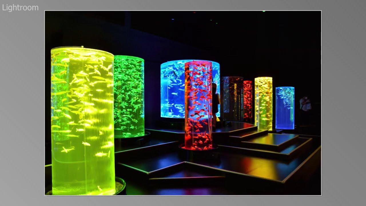 アートアクアリウム美術館 2020