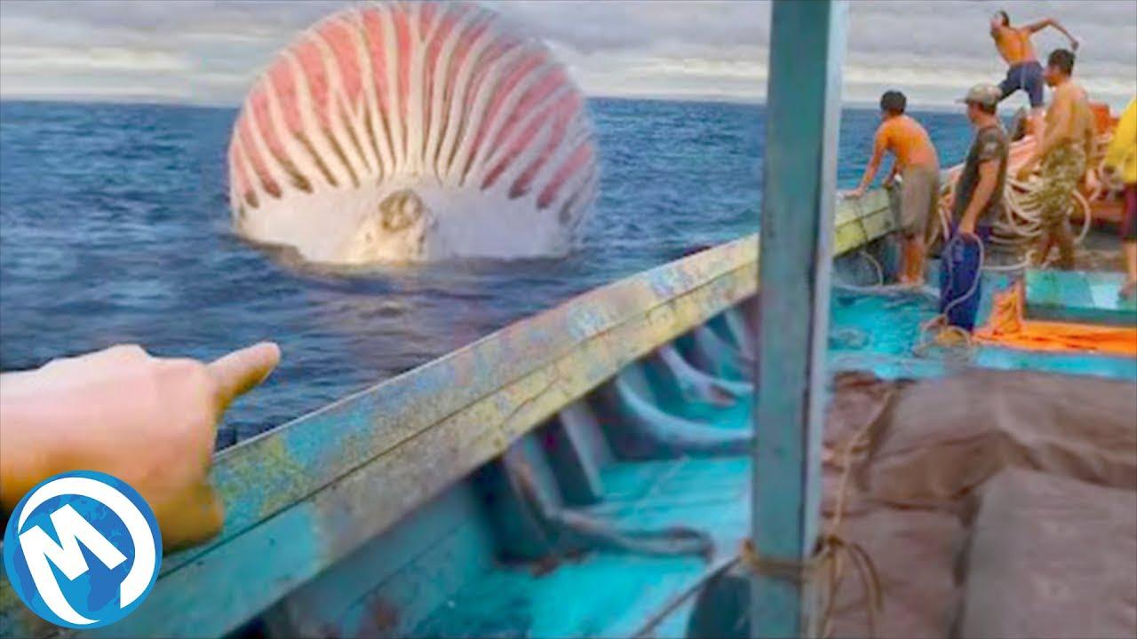 Criaturas Marinas Con Las Que Más Te Vale No Cruzarte
