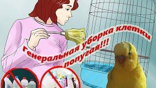 Генеральная уборка клетки попугая. Как делать? Что для этого нужно? #Мои советы #Содержание и уход