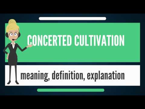 What is CONCERTED CULTIVATION? What does CONCERTED CULTIVATION mean? CONCERTED CULTIVATION meaning