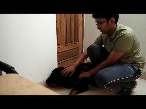 Vet in Dhaka City  পোষা প্রাণীর যত্ন  01912251312 @ Dr. Sagir's Pet Clinic