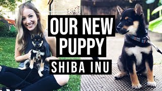 WE GOT A PUPPY | Shiba Inu Puppy (Black and Tan)