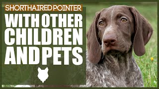 GERMAN SHORTHAIRED POINTER WITH CHILDREN AND PETS