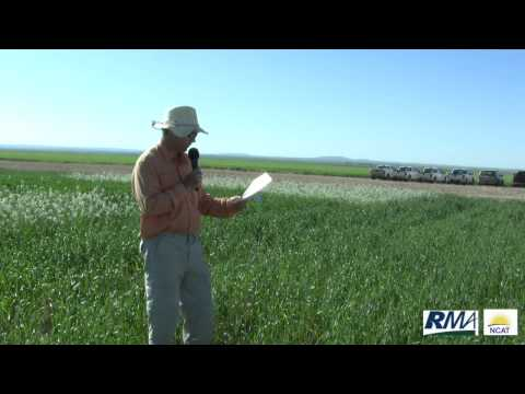 Cover Crop Research by Montana State University. Part 1