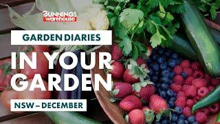 Gardening in December | New South Wales | Bunnings Garden Diary