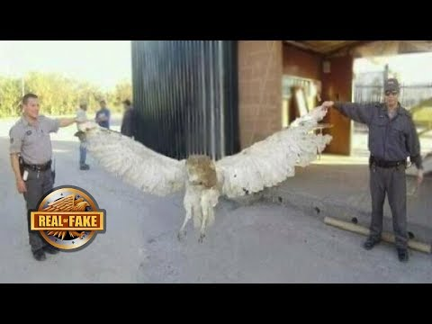 Download Youtube: 5 MYSTERIOUS ANIMALS - real or fake?