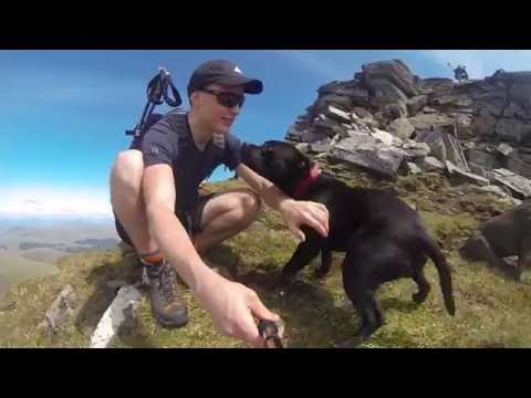 Three Staffies Climb A Scottish Mountain...feat. The Red Arrows