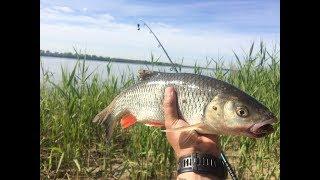 #18 Ловля с Берега на Реке. Мощная Поклевка Рыбы из Серии Отдай Спиннинг на Донку Закидушку. Голавль