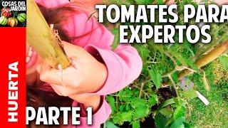Máxima producción de tomates en maceta - Cultivo de tomate Avanzado Plantar tomates en maceta