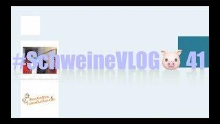 #SchweineVLOG🐷 41  Mastschweine verladen