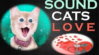 Sounds Cats Love All Time | HQ