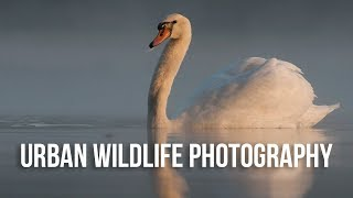 How to Photograph Wildlife in the City | Urban Wildlife Photography