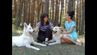 Вухаті та хвостаті (Білі вівчарки, немовлята і тварини)