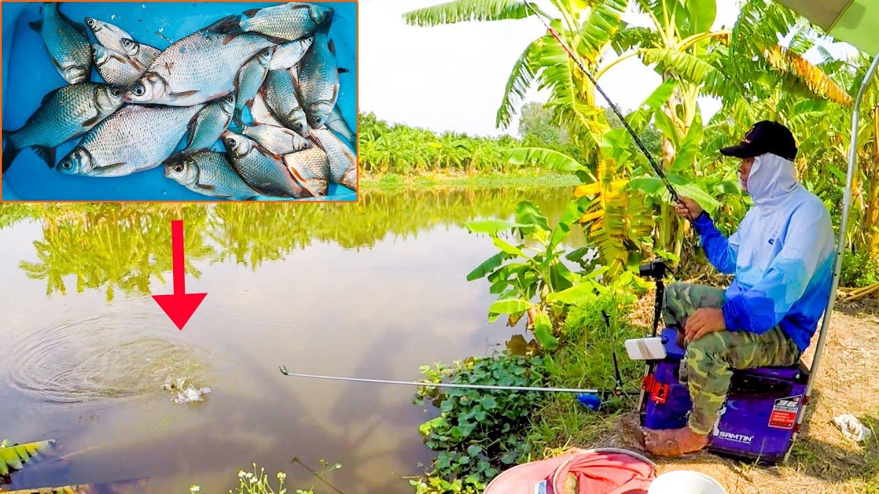 Câu Đài Nghiệp Dư ➣ Câu Cá Diếc Bằng Cần Câu Cá Lam Đồ Song Bảo 3m6 5H