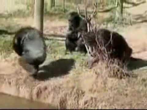 VnExpress   Khỉ con tinh nghịch   Khi con tinh nghich