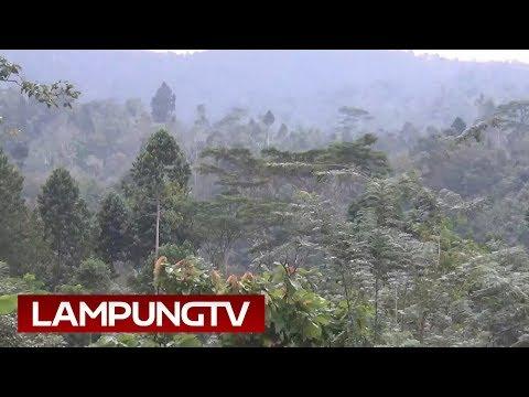 Musik Akustik dari Air Terjun di Hutan Tanggamus