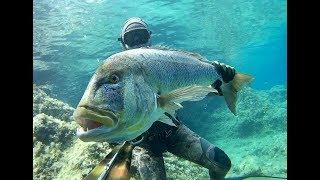 Spearfishing Croatia -