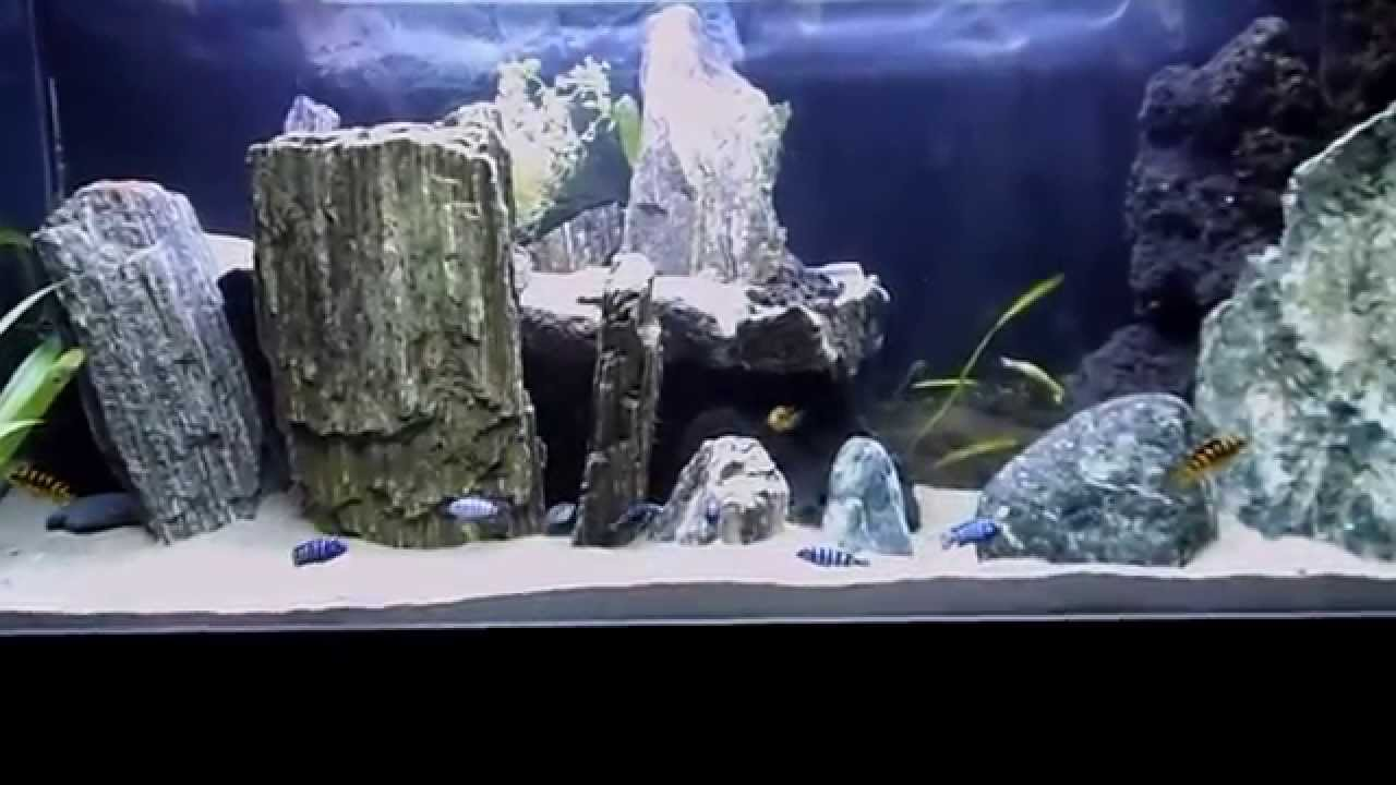 Acquario ciclidi malawi tanganica 250l youtube for Filtro acquario fai da te