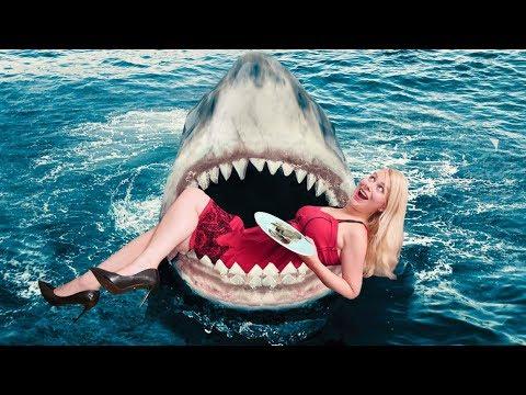 les-requins-testent-ma-cuisine-[dégustation]-♡-virginie-fait-sa-cuisine