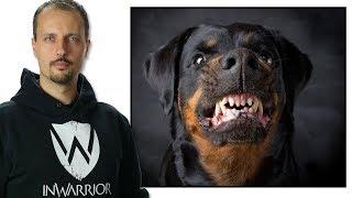 No B.S. Defence Against Dog Attacks