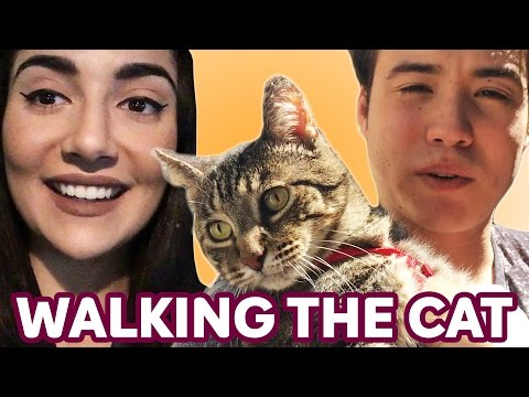 Walking Our Cat For The First Time  Saf & Tyler