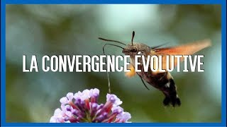 IRL: La convergence évolutive