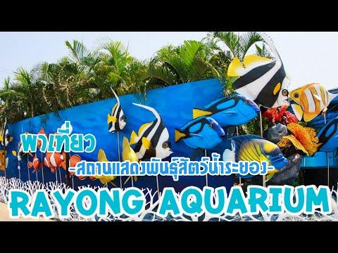 พาเที่ยว สถานแสดงพันธุ์สัตว์น้ำระยอง  RAYONG AQUARIUM by SIAM  REVIEW