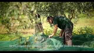 La produzione dell'olio nell'Oleificio Siciliando - Azienda agricola Mangiaracina